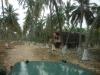 coconut-farm
